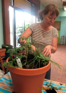 A workshop attendee planting her vegetable container